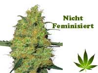 nicht-feminisiert-button